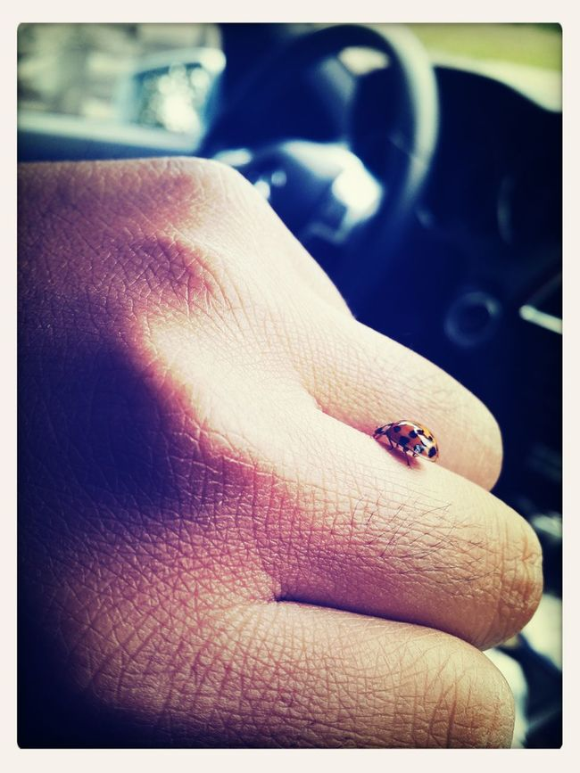 ?Ben, Ladybug Benz