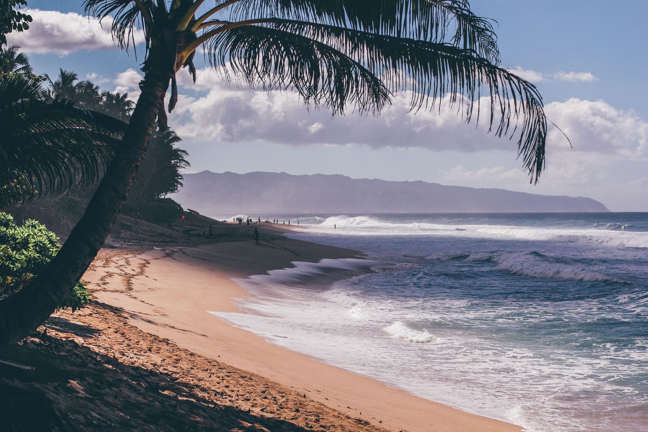 BANZAI Banzai Pipeline Beach Beauty In Nature Day Hawaii Nature No People Northshore Northshorebeach Northshoreoahu Oahu Oahu Hawaii Oahu, Hawaii Outdoors Pacific Palm Tree Sand Sea Sky Sunset Beach Surf Surfing Tree Water
