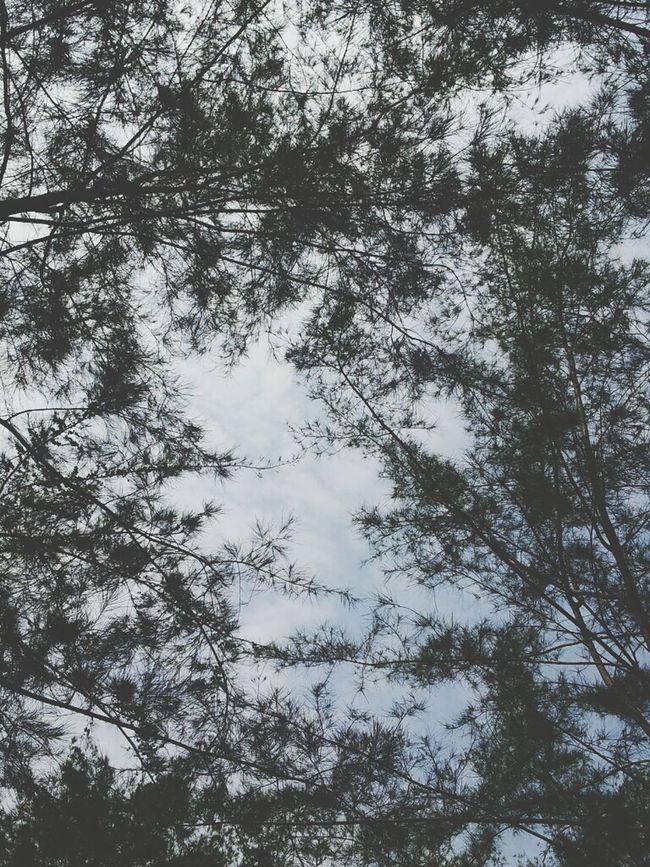 IDK Trees
