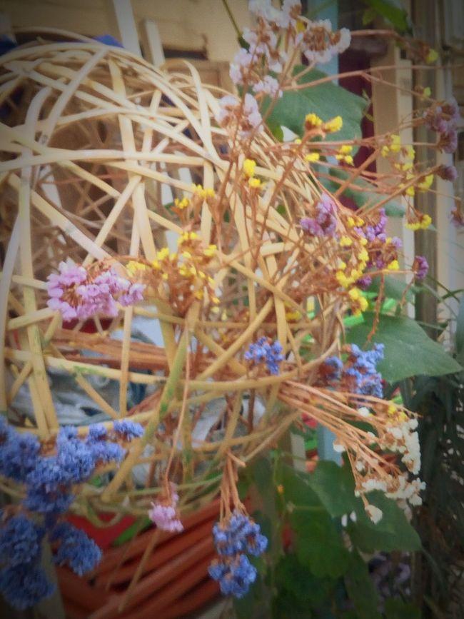 Flower Blossom Day Creativity Sunnertimes Still Beautiful  Autumn Greece & Equal Summer ☀