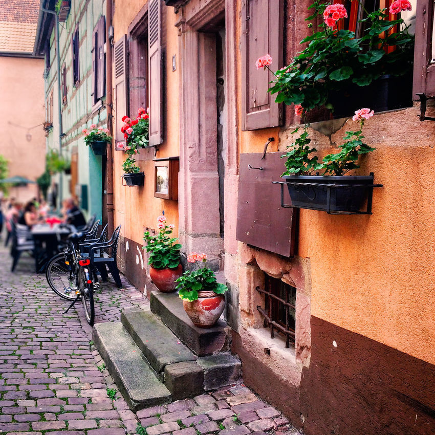 Pretty street in Riquewihr, Alsace, France Alsace Architecture Building Exterior Built Structure Day Door Exterior Flower France Growth House Medieval Narrow Picturesque Plant Potted Plant Riquewihr Street Town Travel Village Wall Window