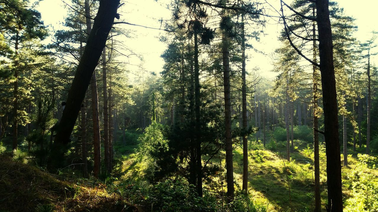 Woods Wexford Ireland Naturesbeauty EyeEm Awards 2016 EyeEm Nature Lover