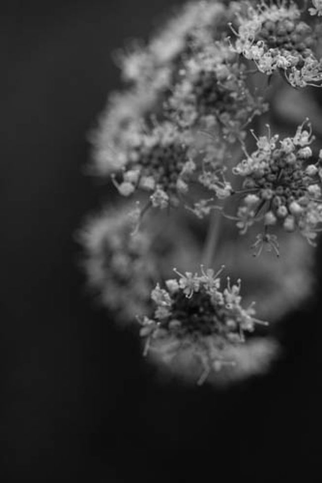 Macro Nature Blackandwhite Monochrome Flowers Macro Beauty