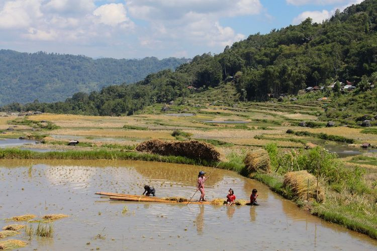 Children's Working Helping INDONESIA Sulawesi Agriculture Beauty In Nature Day Field Growth High Angle View Landscape Lifestyles Mountain Nature Outdoors People Real People Rural Scene Scenics Sky Tana Toraja, Sulawesi Tree Water