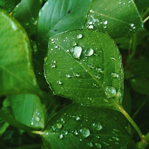 Drop Water Green Color Nature Close-up RainDrop Fragility Beauty In Nature Plant Day Meizu Meizuphoto Meizu Mx6 Naturaleza