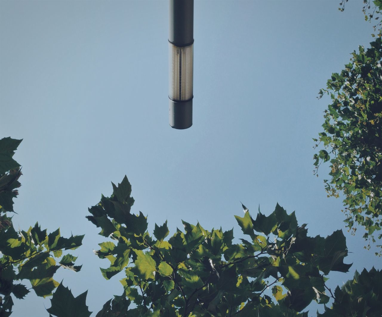 Low Angle View Of Lighting Equipment And Trees Against Clear Blue Sky