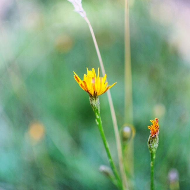 Tranquil Scene Flower Fragility Freshness Growth Petal Stem Yellow Plant Close-up Beauty In Nature Flower Head Nature Focus On Foreground Springtime In Bloom Day Blooming Botany Outdoors Blossom (null)Garden Beauty In Nature Forest