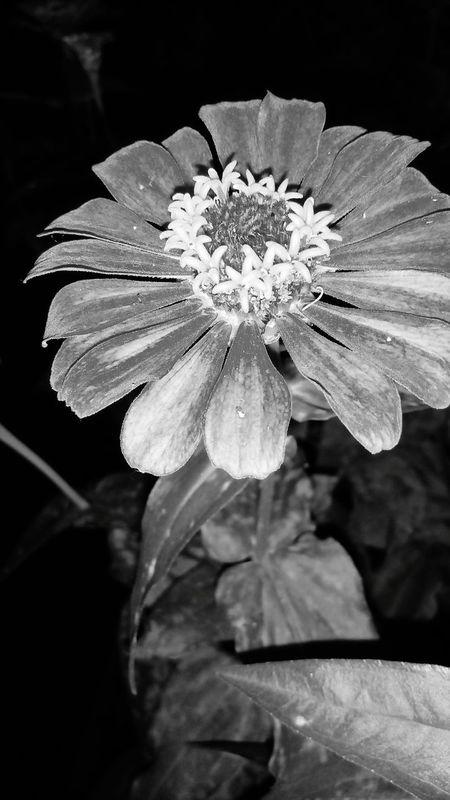 Beauty In Nature Flower Flower Head Fragility Petal Pollen Freshness Nature Outdoors Plant