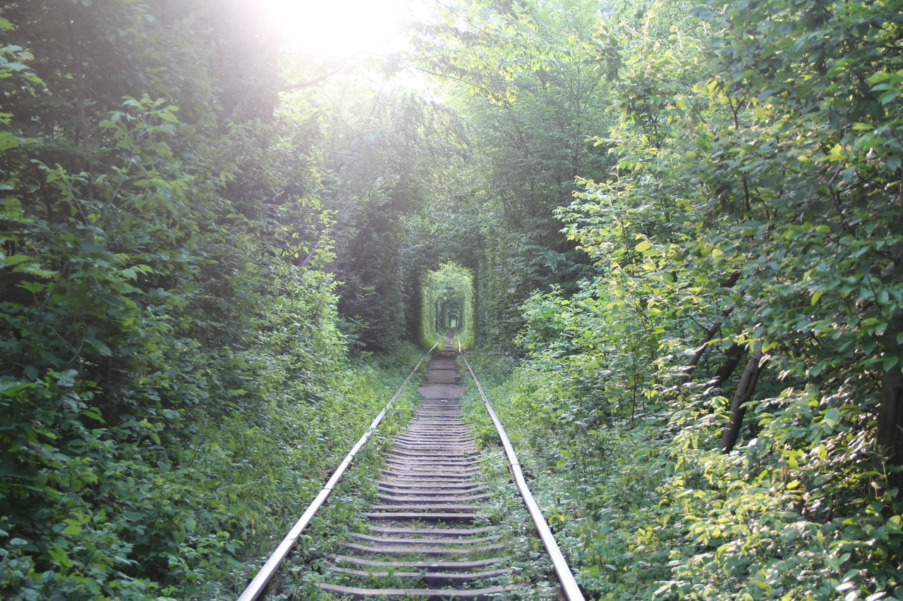 Canon Day Forest Green Light Nature No People Outdoors Railroad Track Travel Tree Tunnel Ukraine