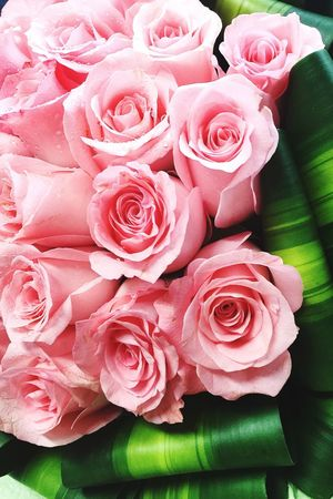 Rose🌹 Love Flowers