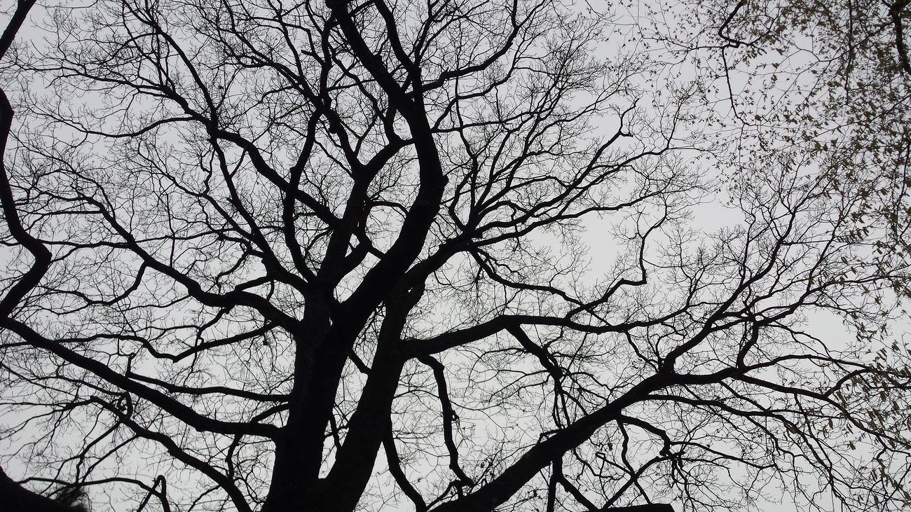 Angio-tree For The Love Of Black And White Nature Lost In The Moment Monochrome