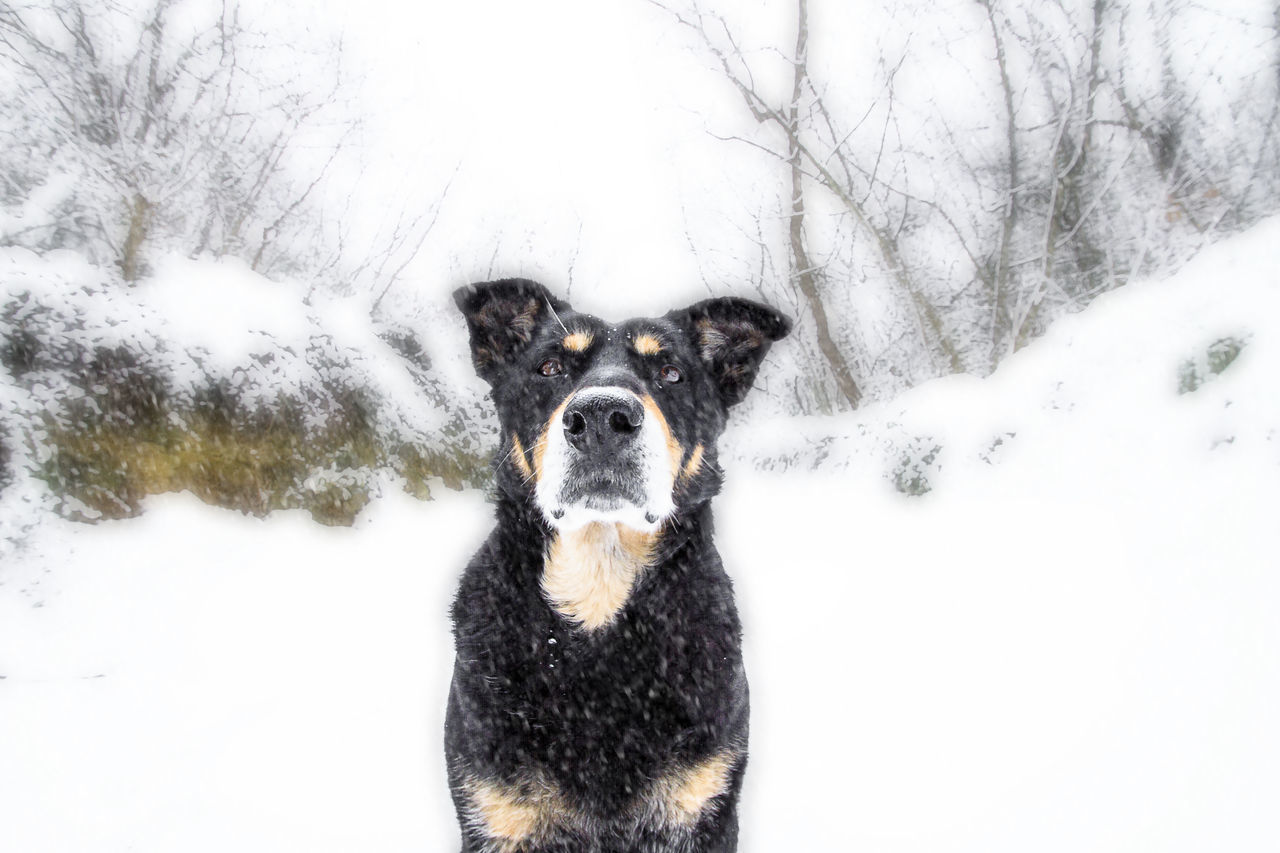 Beautiful stock photos of pets, Animal Themes, Black Color, Cold Temperature, Day