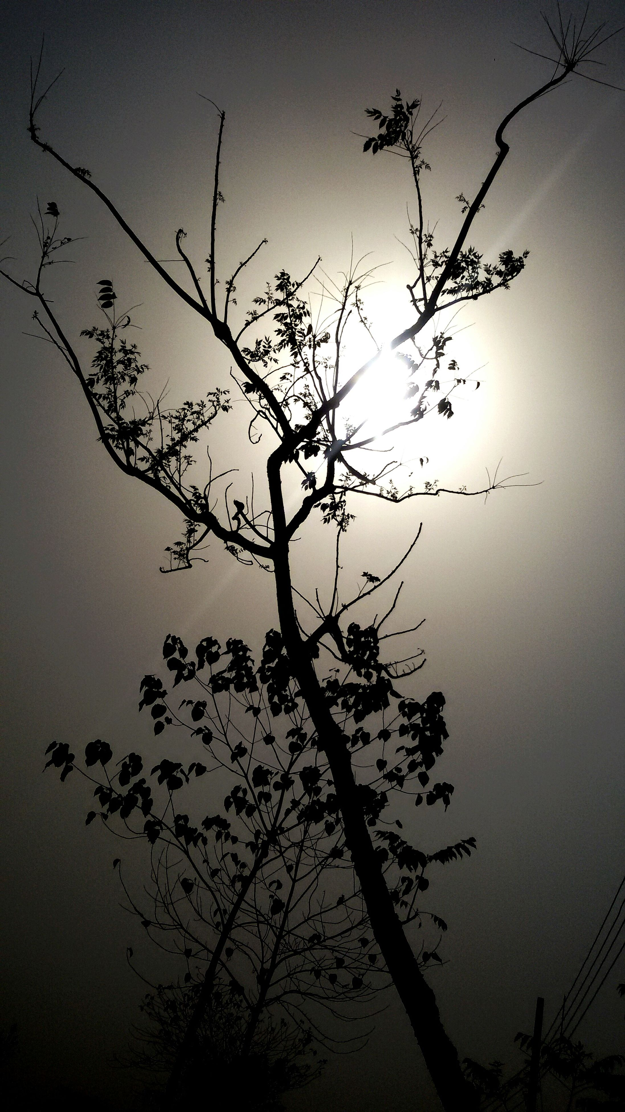 branch, silhouette, bare tree, tree, low angle view, nature, clear sky, tranquility, growth, sky, beauty in nature, dusk, tranquil scene, scenics, sunset, no people, outdoors, twig, tree trunk, dead plant
