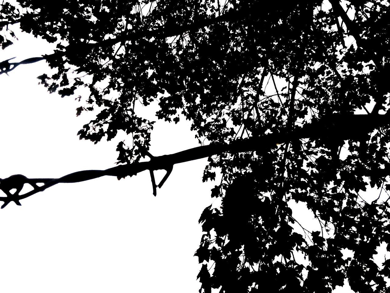 Chain Tree Leaf Silhouette Outdoors Iron String Barbed Wire