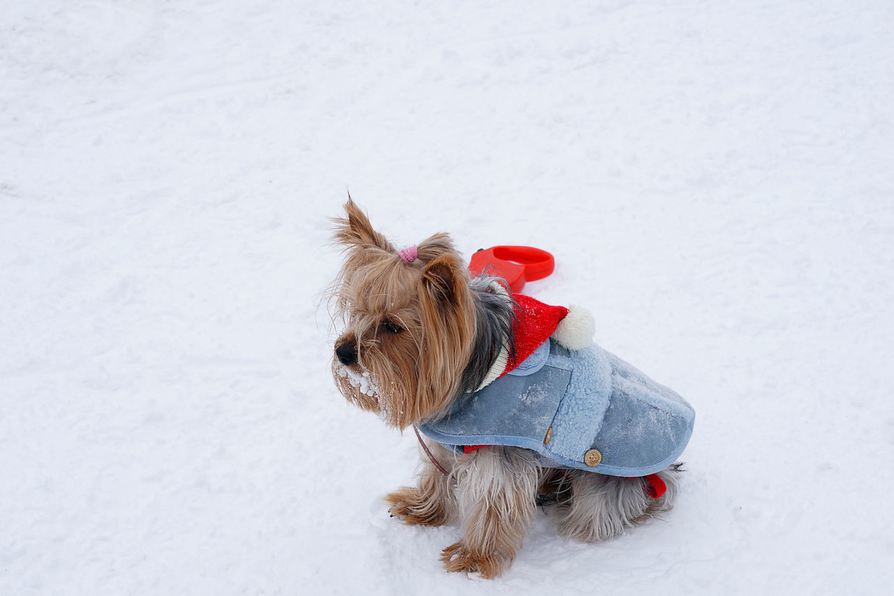 Winter Snow Cold Temperature Christmas Domestic Animals Outdoors No People Pet Clothing Close-up Mammal Multi Colored Winter Dog
