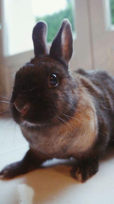 Mon lapin ?? Rabbit