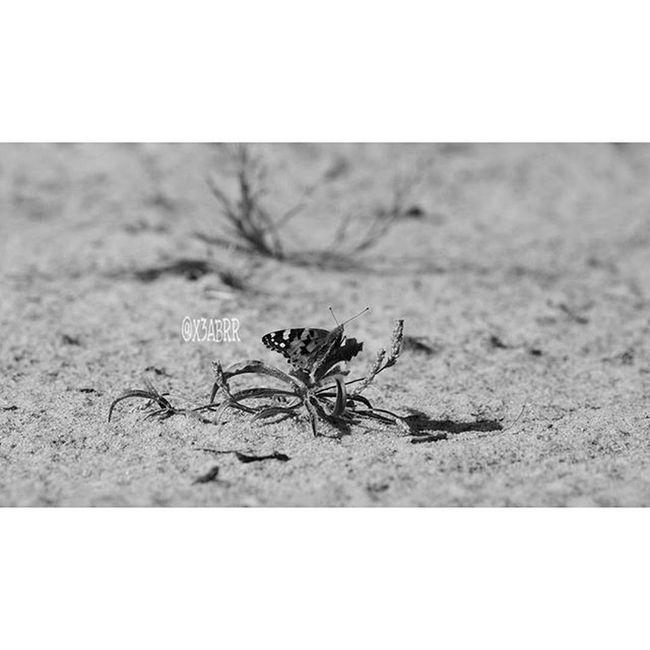 مساء_الخير Bw . Goodevening  . فراشة تصويري insects insect bug bugs TagsForLikes petsandanimals @x3abrr مسهم_بالخير طبيعة closeup landscape animals animals instanature tagsforlikes like4like saudiarabia الطبيعة creature l4l wildlife earth ksa . . . . . sonyalpha57 sonyimages repost blackandwhite