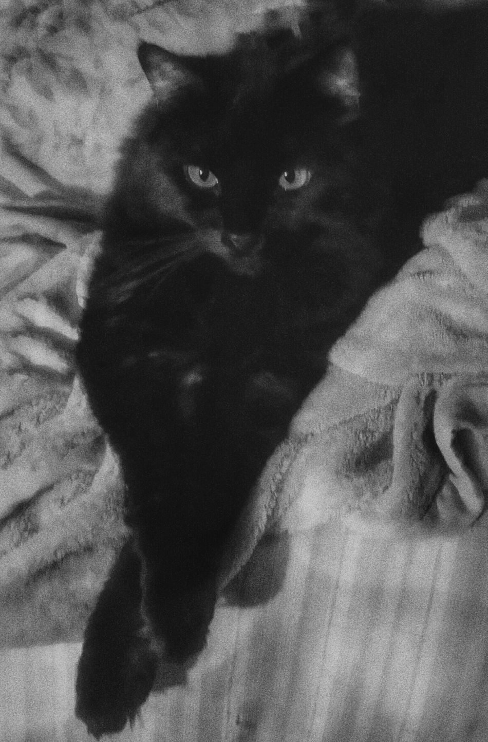 Freedom chill out Enjoying Life Catlover Blackandwhite Photography Black And White Cat My Pretty Girl Pet Photography  Cat Photography Cat's Life