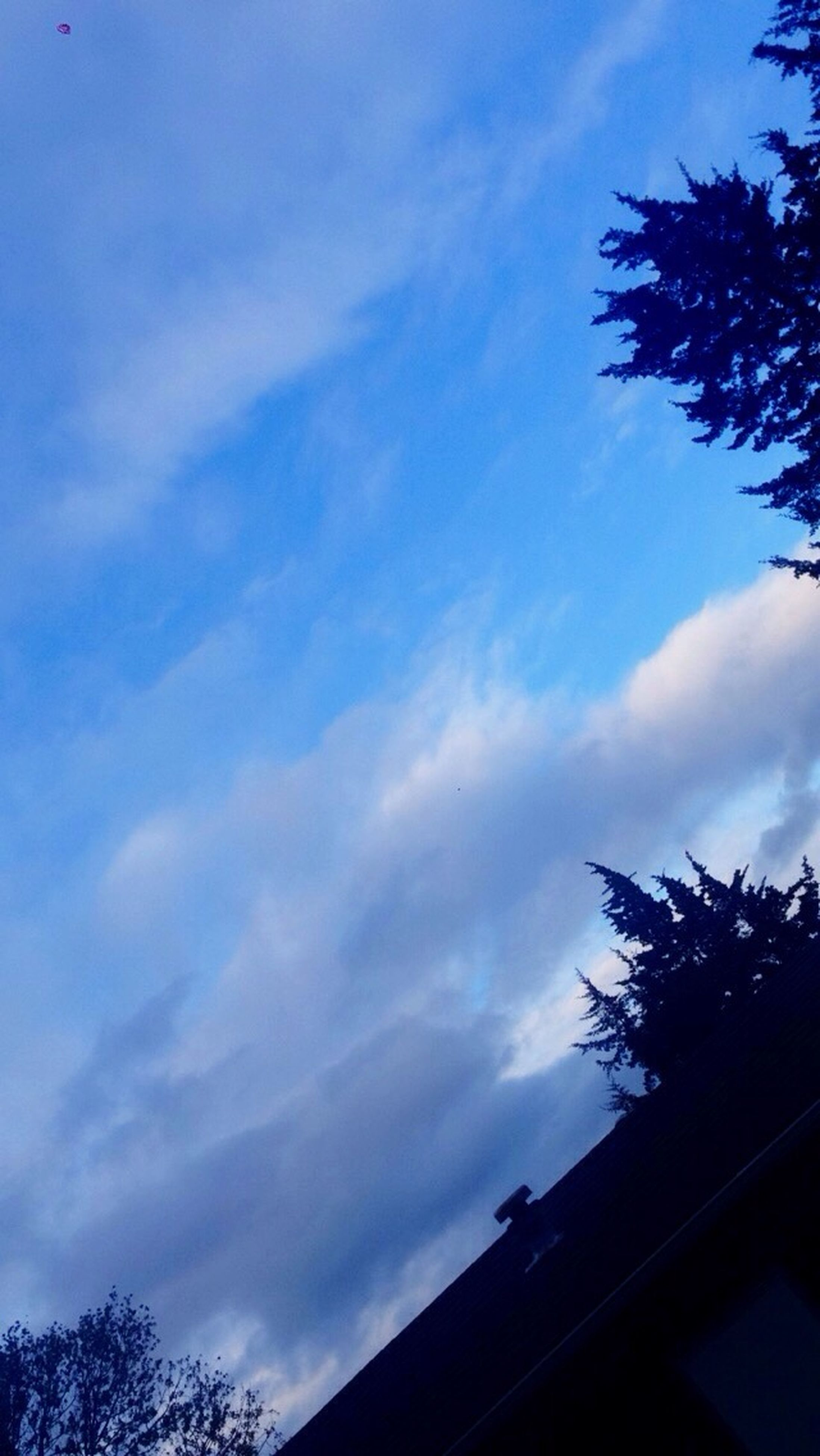 low angle view, sky, tree, silhouette, cloud - sky, built structure, blue, building exterior, architecture, high section, cloud, nature, cloudy, branch, outdoors, beauty in nature, growth, house, no people, day