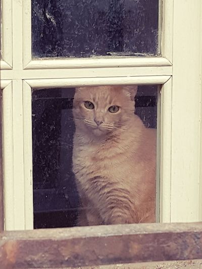 Domestic Cat Pets One Animal Window Feline Door Domestic Animals Animal Themes Looking At Camera Portrait Mammal Day No People Indoors  Close-up Tranquil Scene EyeEm Nature Lover Looking At Camera EyeEmNewHere EyeEm Gallery From My Window Provence Alpes Cote D'azur