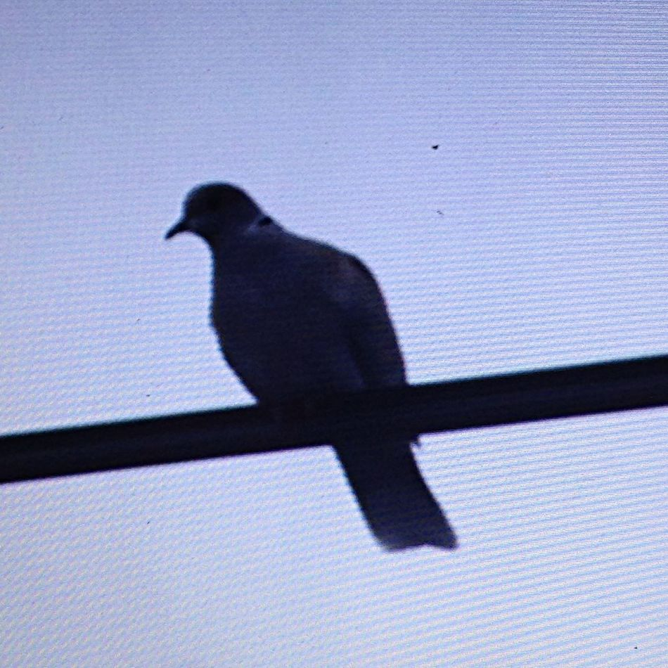 EyeEm Birds Streamzoo StreamzooVille Streamzoofamily profile my face!