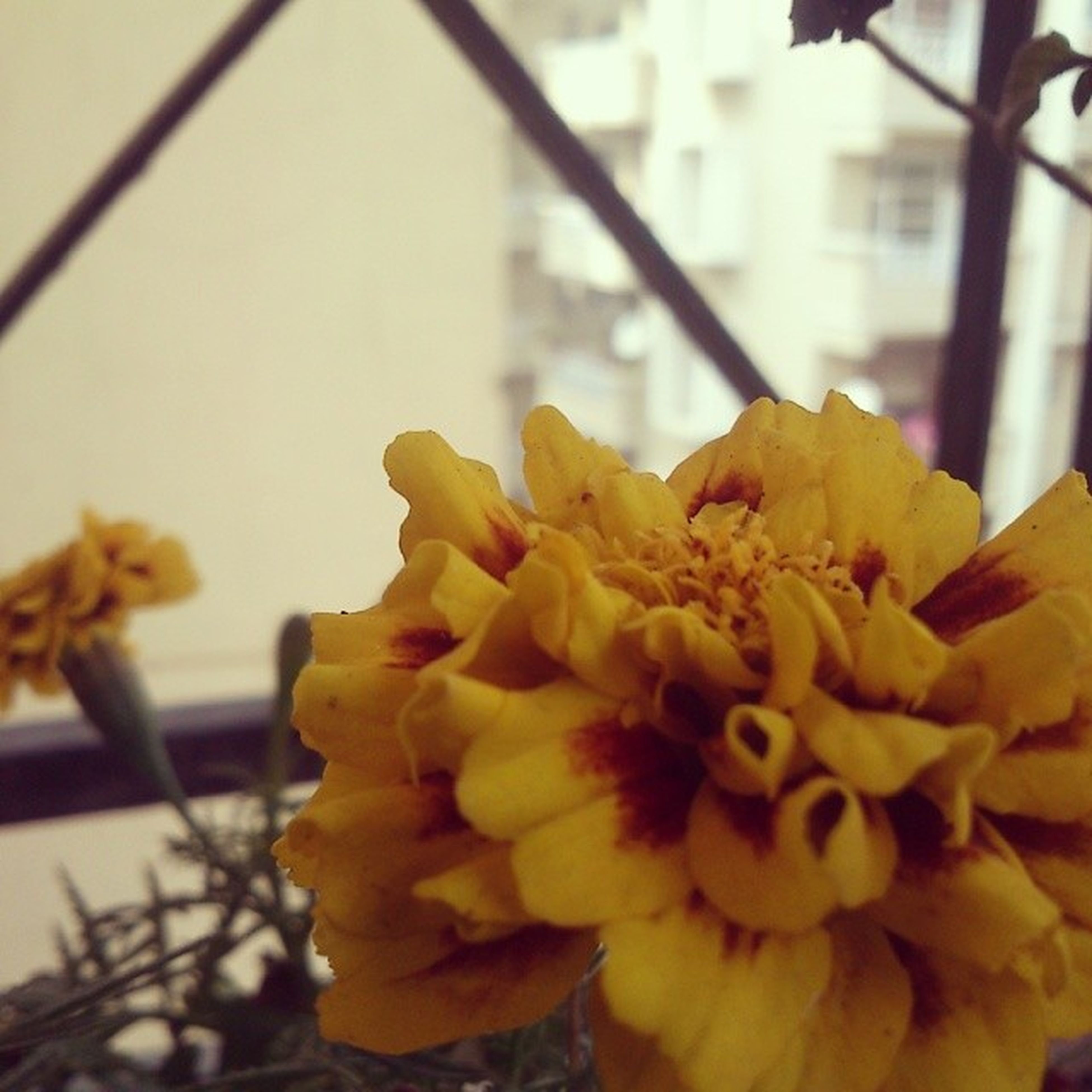 Masterclick Macro Flowers Plant focus fragrance like share sharp clear awesome leaves pretty valencia morning instalike instacomt instagram instapic professional follow yellow red balcony india