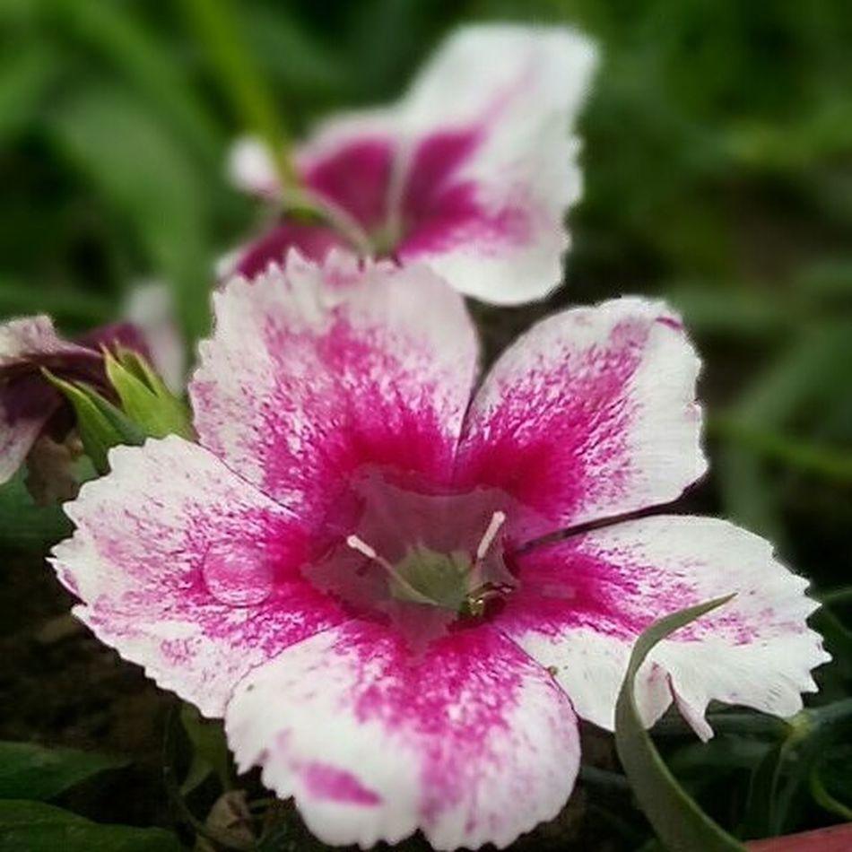 💕Mohbaat💕👩❤️👩 barsa dena tu sawaan🌧☔ aaya hai.....!!!!!💙💚❤💛💜ohh sorry sorry Winter⛄❄ aayi hai 😜😜😝😝 Aaj_ki_baarish Thandi_hwaah Photography Flowers_fall_in_love_with_it