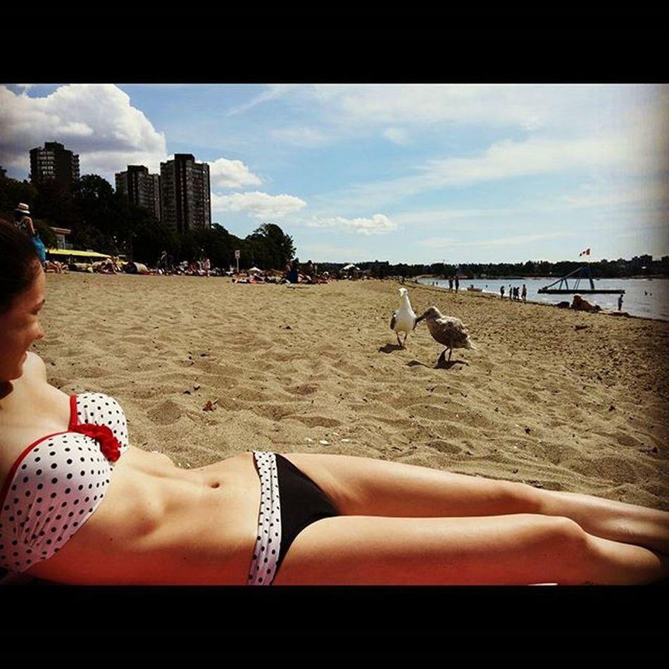 Mima and Seagulls at Englishbay Beach vancouver britishcolumbia vancitybuzz vancity