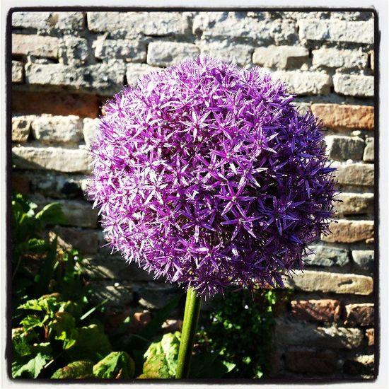 Flowerball Flower Spring Symétrie Lila