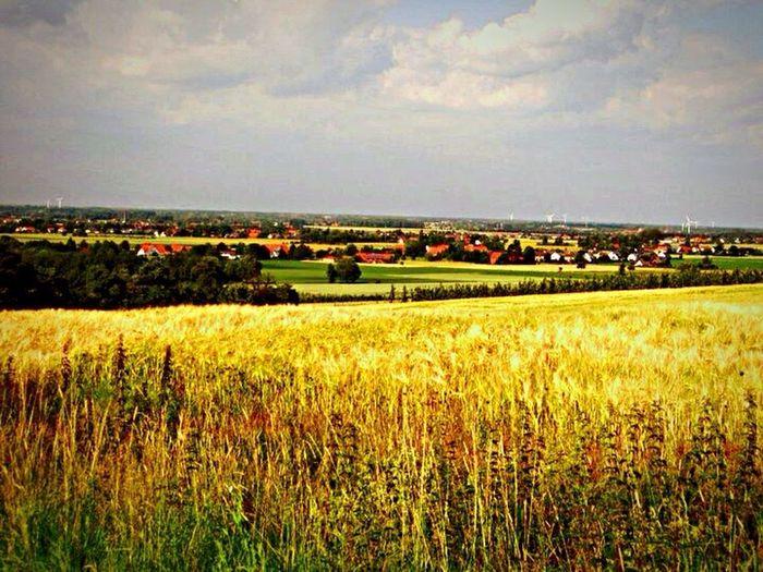 Germany Lübbecke Nature Landscape