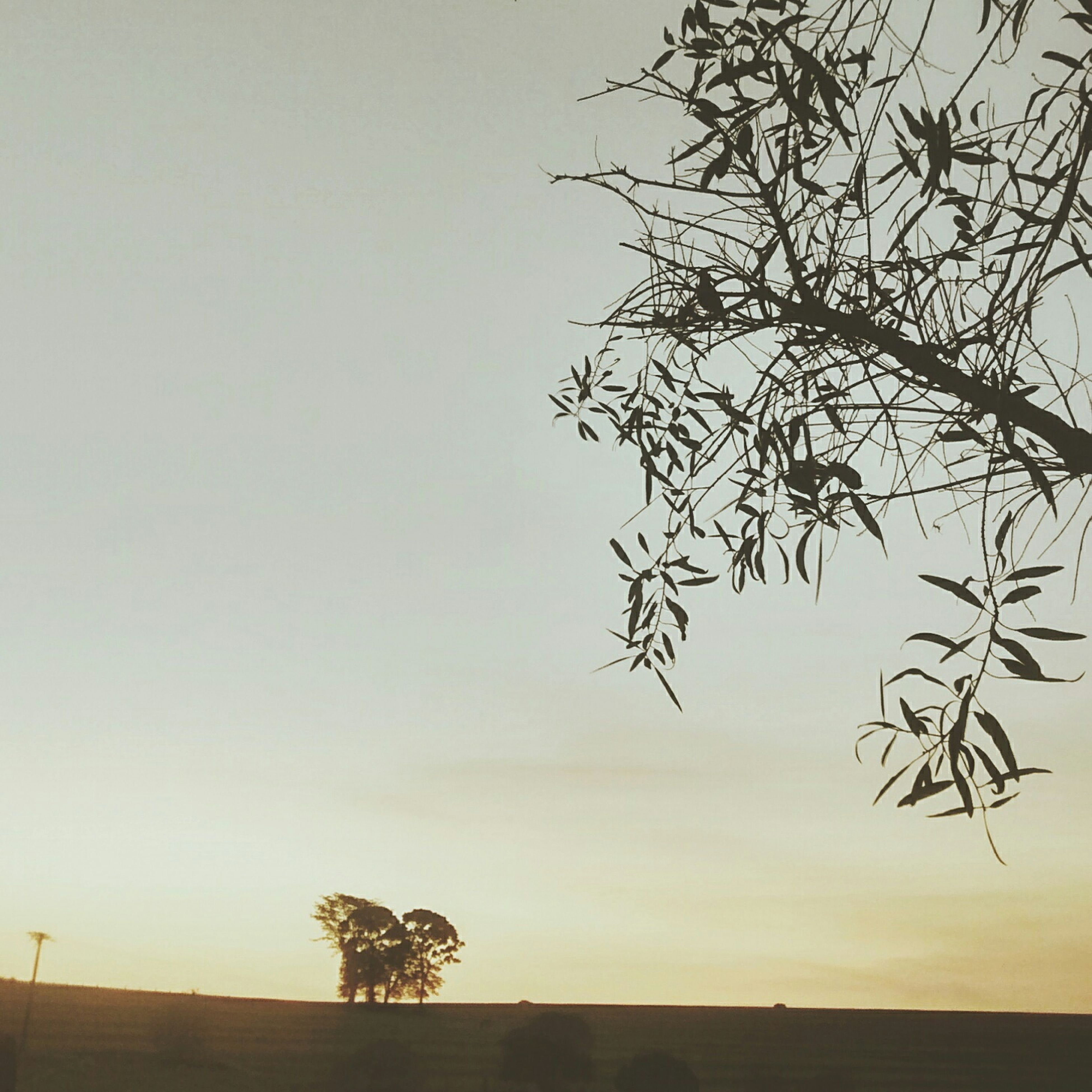 tree, clear sky, tranquility, tranquil scene, branch, bare tree, nature, scenics, beauty in nature, copy space, landscape, silhouette, growth, single tree, sky, field, tree trunk, sunset, non-urban scene, no people
