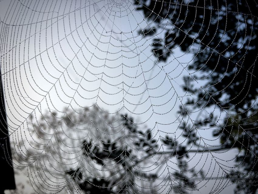 Natural pattern IPhoneography Spider Web No People Close-up Outdoors Nature Fragility Animal Themes Spider Web Pattern Nature Natural Landscapes Natural Pattern EyeEmMagazine