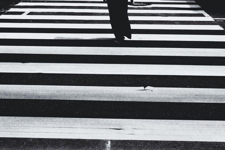 Beautiful stock photos of zebra, Crossing, Front View, Human Body Part, Human Leg