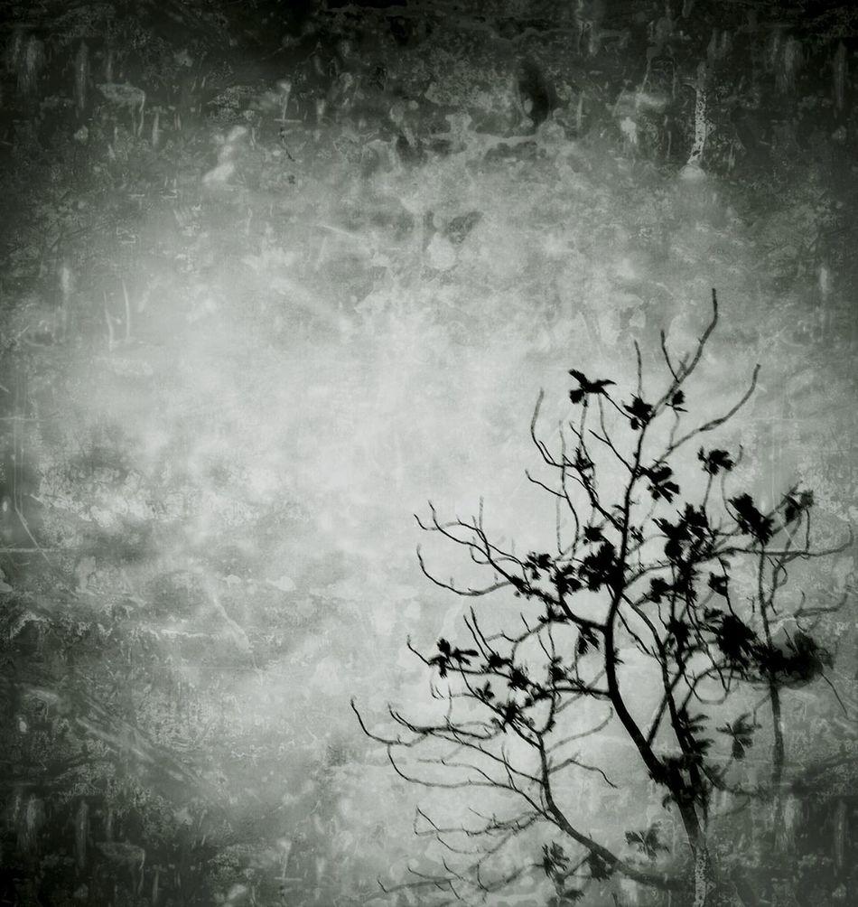 Blackandwhite Darkscene