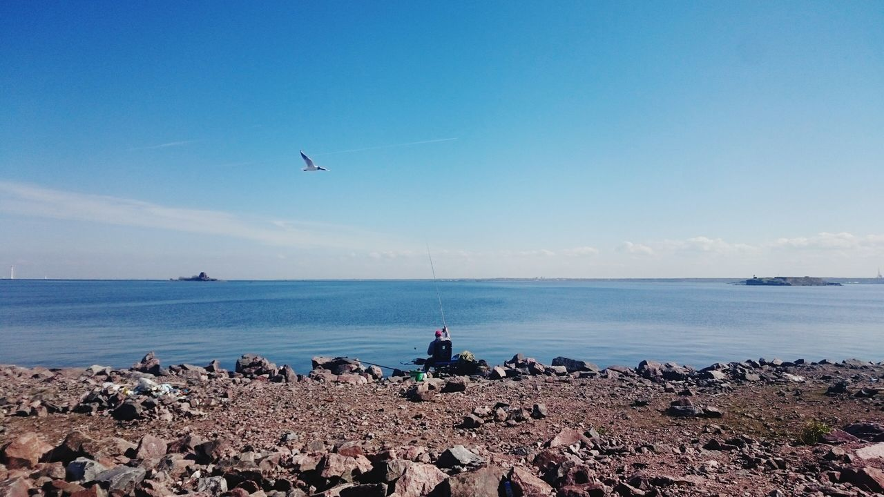 Beautiful stock photos of russia, Anticipation, Bird, Casual Clothing, Clear Sky