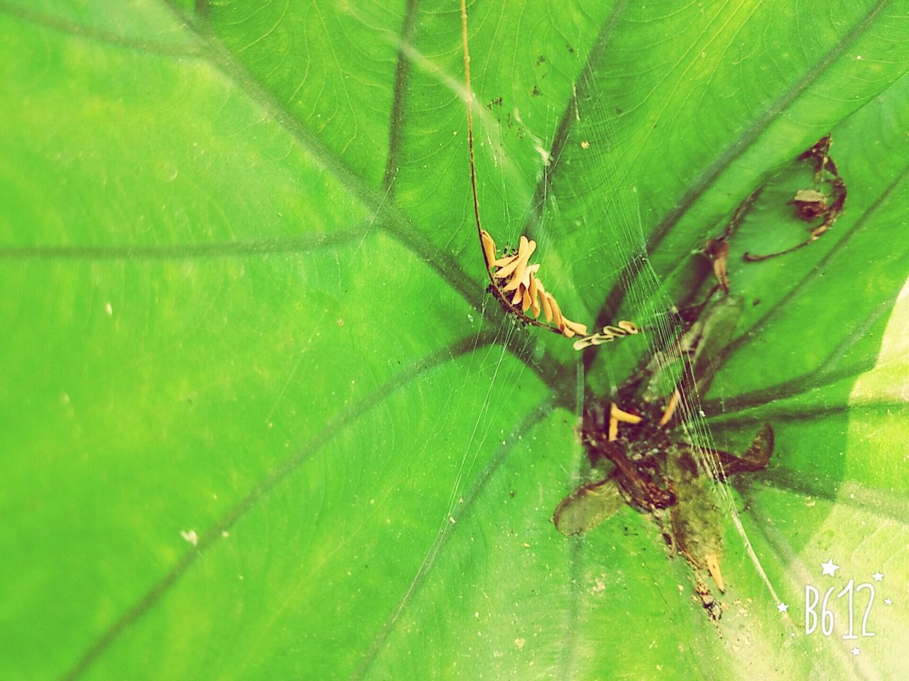 insect, animal themes, animals in the wild, green color, one animal, spider, leaf, nature, close-up, no people, spider web, day, animal wildlife, outdoors, beauty in nature
