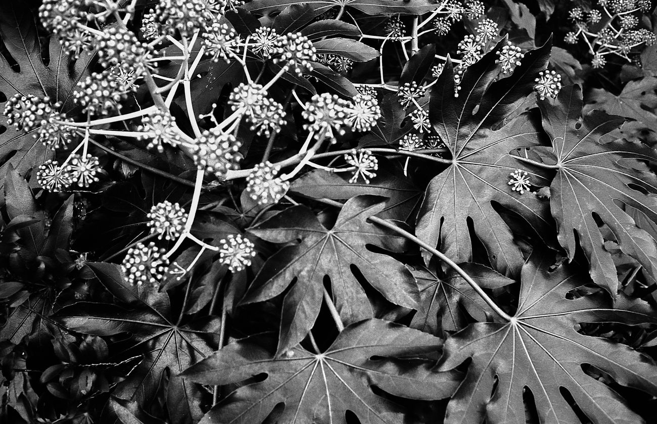 Nature Day Life Black And White Blackandwhite Photography Snapshots Of Life Film Monochrome Filmcamera Black & White Black And White Photography Film Photography Snap Bnw Leica Black And White Nature Beauty In Nature