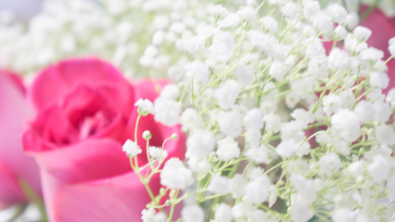 Plant Close-up Bunch Of Flowers Weddingphoto Weddingphotography Wedding Photography Celebration Decoration Weddingdestinationphotography Weddingdecorations Weddingdecor Arrangement Plant Flower