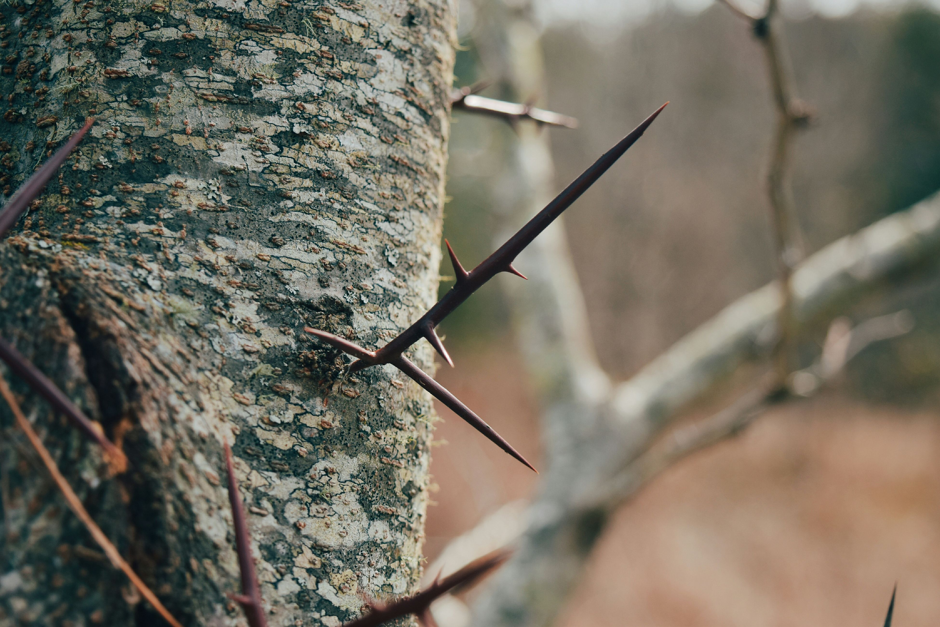 focus on foreground, branch, tree, twig, close-up, nature, selective focus, growth, outdoors, day, forest, plant, tree trunk, no people, tranquility, dry, stem, leaf, beauty in nature, dead plant