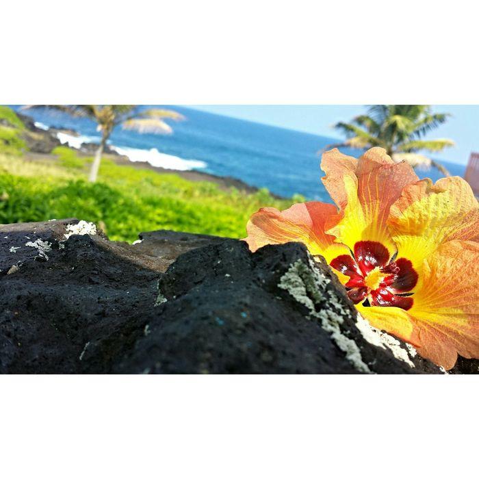 Where is your paradise?? Livehappy HawaiiIsMyHome WheresYourHome?