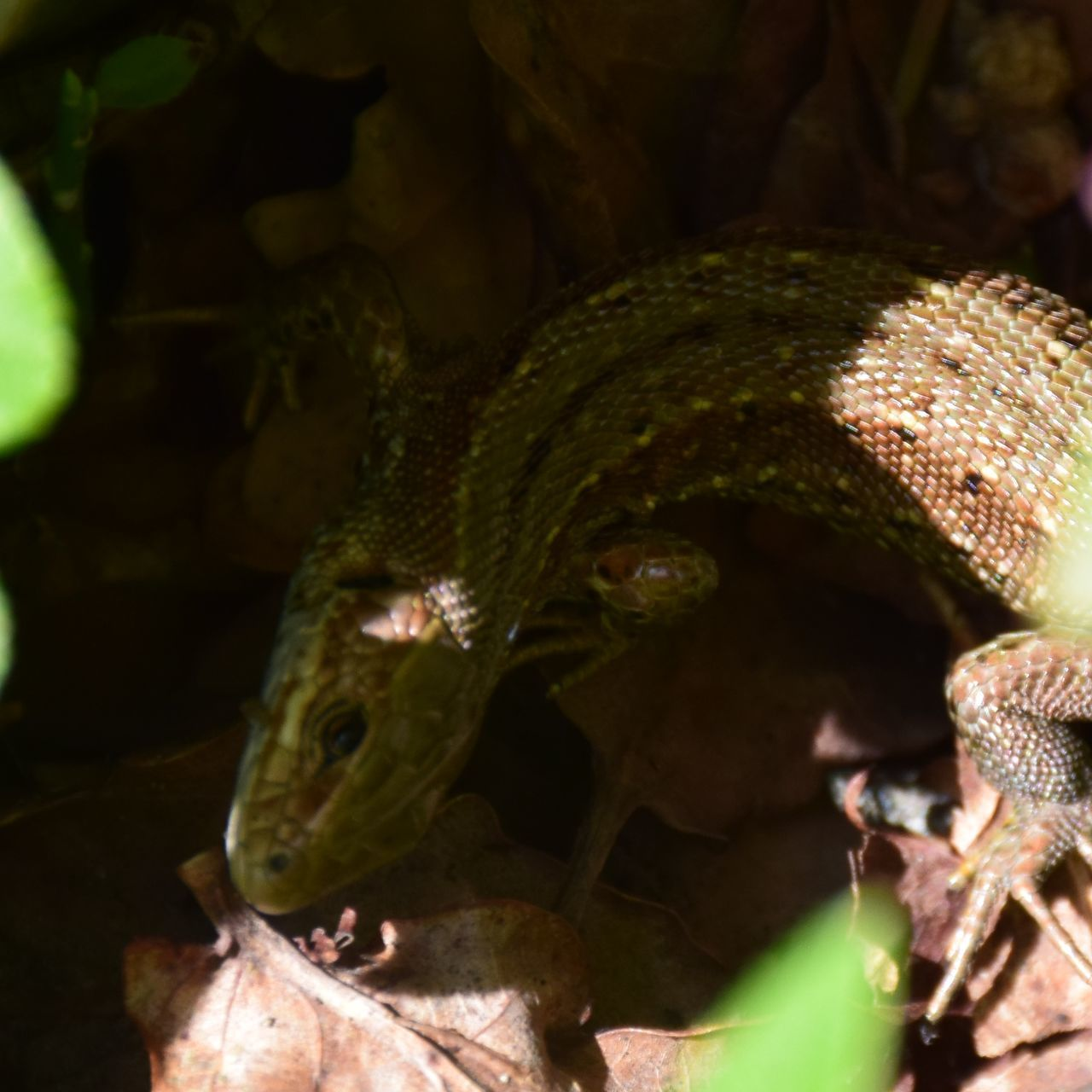 animal themes, animals in the wild, one animal, close-up, no people, nature, night, outdoors, reptile, beauty in nature, mammal