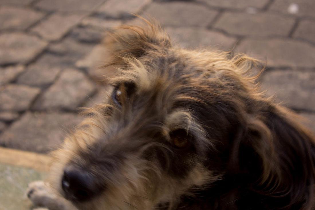 Dog Dog Eyes Hungry Lonley Sadness Streert Street Dogs