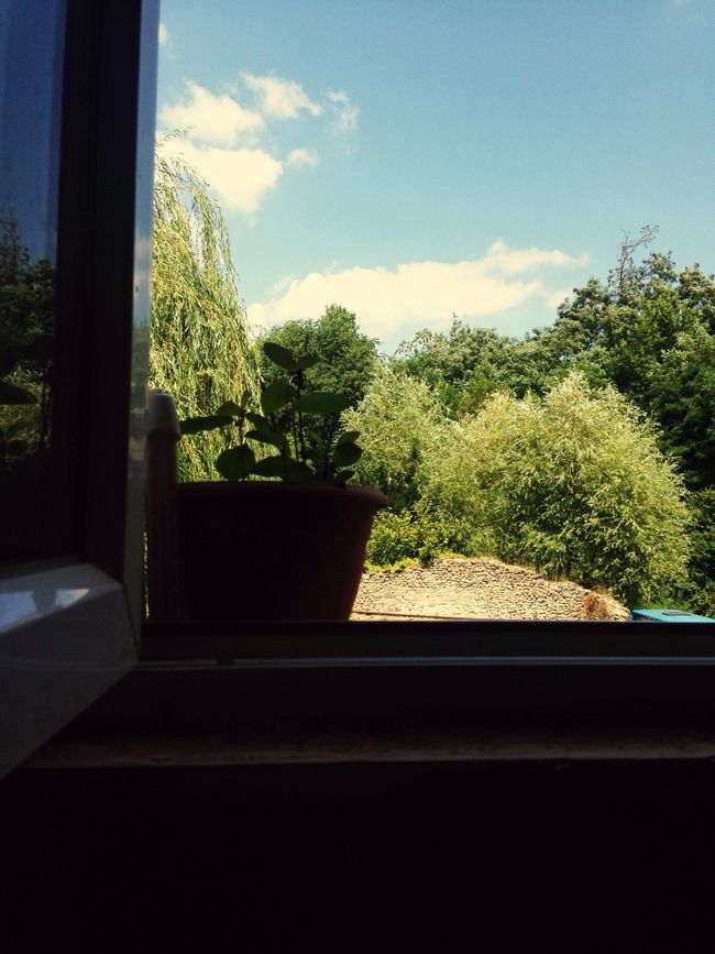 Tenir jusqu'au grand saut. Taking Photos At Home Green From My Window Plants EyeEm Nature Lover Relaxing Beauty In Ordinary Things Reflets Smart Simplicity