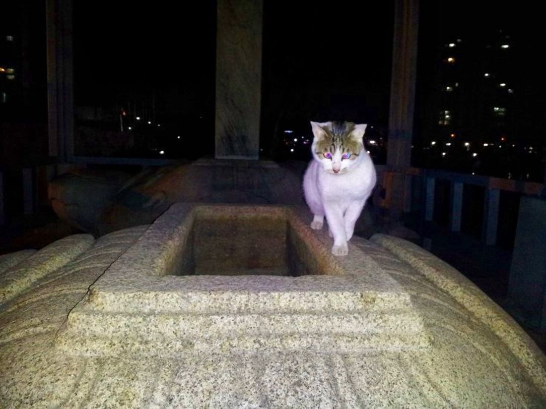 Cat Name Hana Seoukchon Lake Cats Nature Photography Cat Lovers Little Cats Alley Cat A Feral Cat LOTTEWORLD
