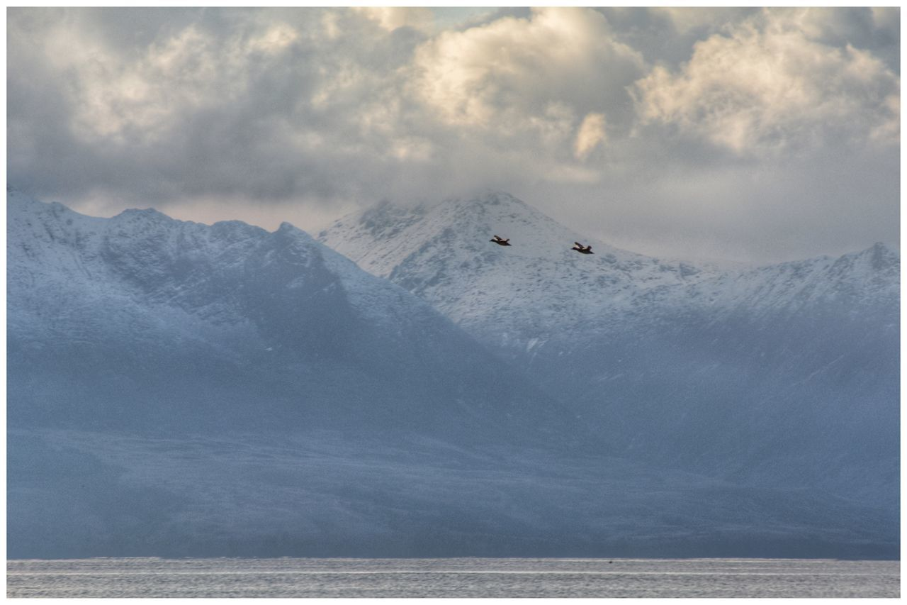 Ducks fly past snow-capped and cloudy Isle of Arran - series Snow Weather Mountain Nature Cold Temperature Winter Beauty In Nature Scenics Tranquil Scene Sky Tranquility Landscape Day Outdoors No People Mountains Isle Of Arran  Arran  EyeEm Eye4photography  EyeEmBestPics EyeEm Gallery Bird Photography Birds Ducks