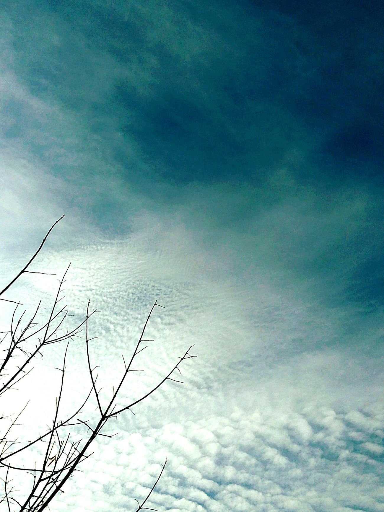 Vintage Photo Outdoors Day No People Trees And Sky Beauty In Nature Low Angle View Tree Nature Cloud - Sky Clouds And Sky Sky Clouds