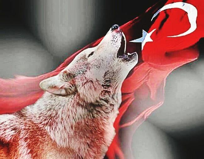 Ccc Bozkurt MHP Hi! Hello World Turkey Selfies Turkey Ankara Ankara Relaxing *Daglarinda bozkurt ulumayan memleketin ovasi itlerle dolar..