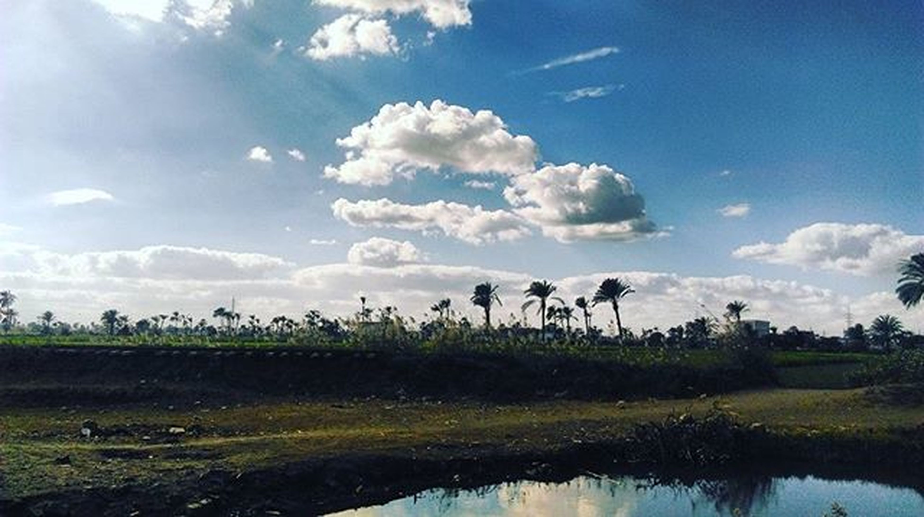 Nature Sky Palms Green_sight