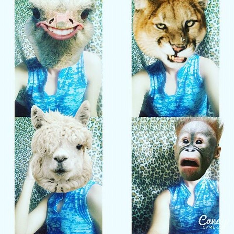 Tuesday Chooseday  Wild Animalface Tuesdaymorning Morningselfie Morning Haveaniceday Haveagoodday Crazy Ilovemyselfie Iwokeuplikethis Gayteenager Gay Like4like F4F Follow4follow Followme MUAHH  💜💜💜💜