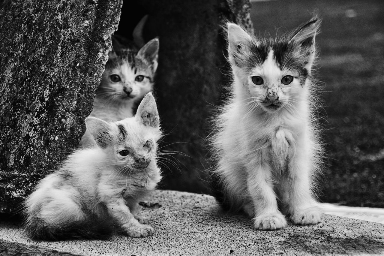 A group of kitties at the back Alley, They look in to my camera together when I was Calling them. Alley Alley Cat Animal Eye Animal Themes Blackandwhite Cat Domestic Cat EyeEm Gallery Eyemphotography Johor Bahru Looking At Camera Photo Of The Day Photooftheday Streetphoto_bw Streetphotography Vscocam Week Of Eyeem Up Close Street Photography Showing Imperfection